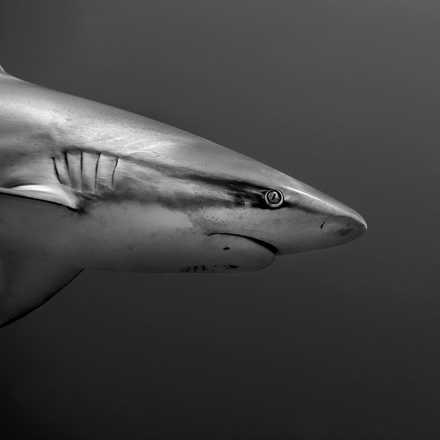 Wasser-Bilder aus der LUMAS Ausstellung 'Im Rausch der Tiefe'