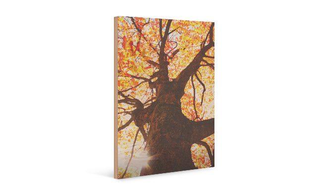 Herbst-Bild auf Holz gedruckt
