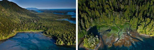 Das Clayoquot Sound Reservat an der Westküste Kanadas umfasst das gesamte Spektrum an Lebensräumen