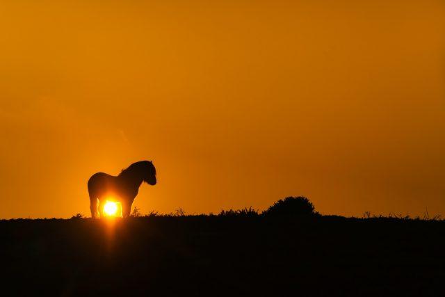 Der schönste Moment meiner Reise war, als der Leithengst der Herde auf einem Hügel vor der untergehenden Sonne posierte.