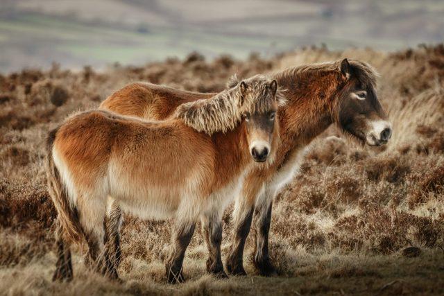 Pferdefotografie ist eine wahre Herausforderung